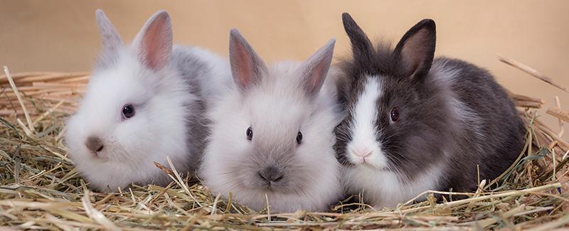 Het konijn als huisdier